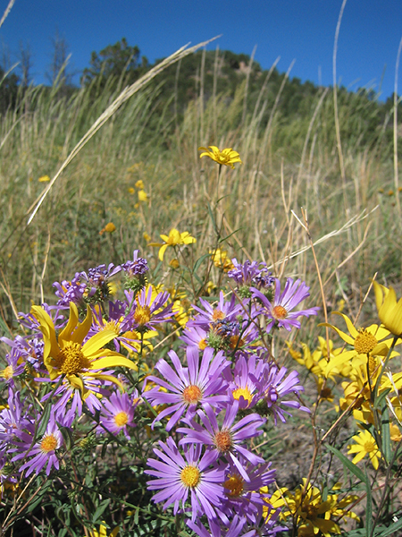 blog-meadow-flowers