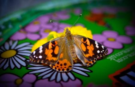 butterflies-0