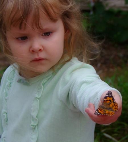 butterflies-14